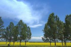 Fleurissez la ferme dans Zhaosu, comté de Yili, Xingjiang Photographie stock