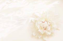 Fleurissez la pivoine sur un fond clair avec des modèles Images stock