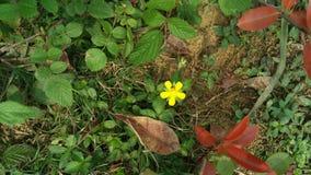 Fleurissez la plante verte de la belle d'extravagance de ressort vie heureuse rouge d'humeur belle images stock