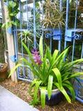 Fleurissez la porte de bleu d'usine de Bromeliad Photographie stock