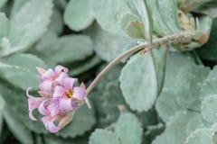 Fleurissez le cactus Image stock