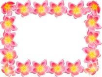 Fleurissez le cadre Photo stock