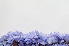 Fleurissez le cadre de conception - thème avec les fleurs bleues Image libre de droits