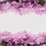 Fleurissez le cadre de conception - thème avec les fleurs roses Images libres de droits
