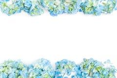 Fleurissez le cadre de frontière des fleurs bleues d'hortensia sur le fond blanc Configuration plate, vue supérieure Fond floral image libre de droits