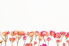 Fleurissez le cadre fait de roses sur le fond blanc Composition en jour de valentines Configuration plate, vue supérieure Photo stock