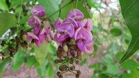 fleurissez le fond avec le bloosom violet de bourgeons de couleur de feuilles vertes Photographie stock