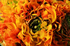 Fleurissez le fond, macro des pétales oranges, jaunes, verts Photographie stock libre de droits