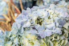 Fleurissez le fond sur une île tropicale de Bali, Indonésie Fond très beau de fleur au soleil Fermez-vous vers le haut du macro Image stock