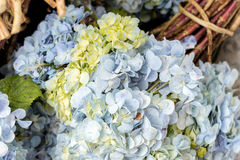Fleurissez le fond sur une île tropicale de Bali, Indonésie Fond très beau de fleur au soleil Fermez-vous vers le haut du macro Image libre de droits