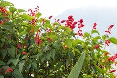 Fleurissez le fond sur une île tropicale de Bali, Indonésie Fond très beau de fleur au soleil Fermez-vous vers le haut du macro Photographie stock libre de droits