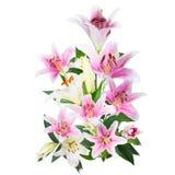 Fleurissez le lis sur un fond blanc avec l'espace de copie pour votre messa Images libres de droits
