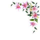 Fleurissez le lis sur un fond blanc avec l'espace de copie pour votre messa Photos stock