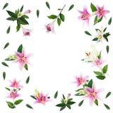 Fleurissez le lis sur un fond blanc avec l'espace de copie pour votre messa Image stock