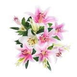 Fleurissez le lis sur un fond blanc avec l'espace de copie pour votre messa Images stock