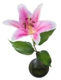 Fleurissez le lis sur un fond blanc avec l'espace de copie pour votre messa Photo libre de droits