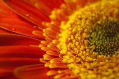 Fleurissez le plan rapproché Photographie stock libre de droits