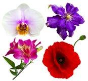 Fleurissez les orchidées de collection, pavots, Alstroemeria, clématite Photographie stock