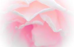 Fleurissez les pétales de rose, tons doux et doux de style doux Fond pour la décoration Photo libre de droits