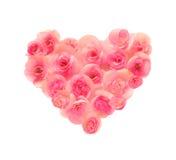 Fleurissez les pétales formant une forme de coeur sur le fond blanc Photos libres de droits