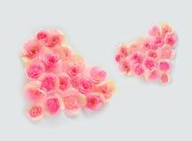 Fleurissez les pétales formant une forme de coeur sur le fond blanc Photographie stock libre de droits