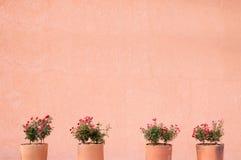 Fleurissez les roses rouges dans le pot d'argile sur un fond de mur Images stock