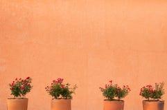 Fleurissez les roses rouges dans le pot d'argile sur un fond de mur Image stock