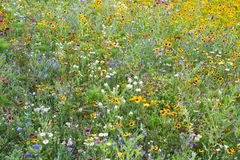 Fleurissez usines de floraison sauvages de parc de campagne de fleur de pré les diverses Images libres de droits