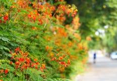 Fleurissez vibrant sur la rue, le foyer mou et la tache floue Image libre de droits