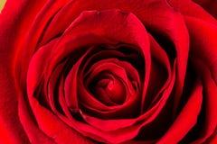 Fleurissez, vous êtes levé, rouge, macro, romantique, valentine, amour Image libre de droits