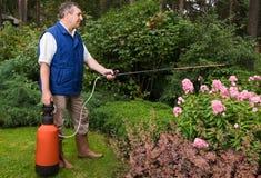 Fleuriste aîné travaillant dans le jardin Photo stock