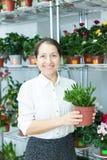 Fleuriste avec le Crassula au magasin Photo stock