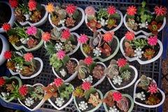 Fleuriste dans Dalat Images libres de droits