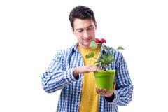 Fleuriste de jardinier avec une fleur dans un pot d'isolement sur le backgr blanc Photos stock