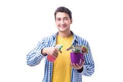 Fleuriste de jardinier avec une fleur dans un pot d'isolement sur le backgr blanc Photo libre de droits