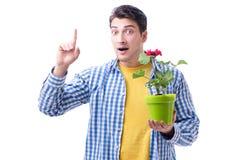 Fleuriste de jardinier avec une fleur dans un pot d'isolement sur le backgr blanc Images libres de droits