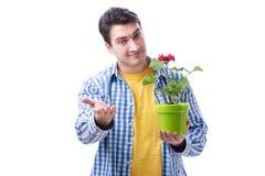 Fleuriste de jardinier avec une fleur dans un pot d'isolement sur le backgr blanc image stock