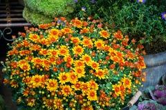 Fleuriste de rue Images libres de droits