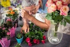 Fleuriste masculin arrangeant des fleurs Photographie stock libre de droits