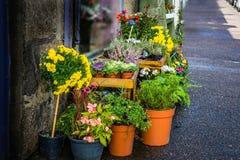 Fleuriste Selling Range des pots de fleur photo stock