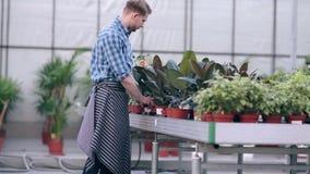 Fleuristes beaux travaillant en serre chaude clips vidéos
