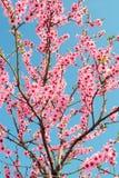 Fleurit des arbres Image libre de droits