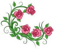 Fleurit des branches de roses Photographie stock