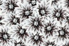 Fleurit des dahlias blanc noir Drapeau des fleurs Background collage floral Composition de fleur Image stock