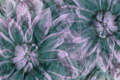 Fleurit des dahlias blanc-turquoise-roses Drapeau des fleurs Background collage floral Composition abstraite Photographie stock
