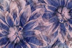 Fleurit des dahlias gris-bleu-roses Drapeau des fleurs Background collage floral Composition abstraite Image stock