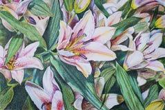 Fleurit des lis avec les crayons colorés Photographie stock libre de droits