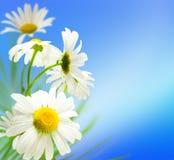 Fleurit des marguerites photo libre de droits