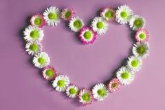 Fleurit des marguerites dans la forme du coeur sur la violette Image libre de droits
