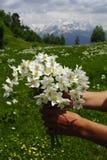 Fleurit des montagnes Caucase Photographie stock
